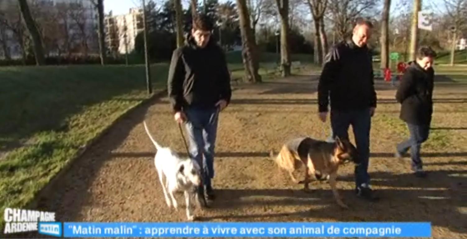 Méthode éducation dressage chien reims : renforcement